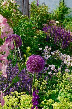 Allium, Plants, Eco Garden, Yard Maintenance, Right Guy, Landscape Diagram, Wonderland, Garden Planning, Planting