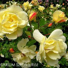 Celina Rose, Flowers, Plants, Pink, Plant, Roses, Royal Icing Flowers, Flower, Florals