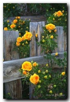 porta com rosas amarelas