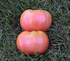 Berkeley Tie Dye Pink Tomato Seeds