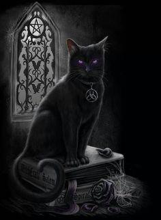 .Black Magic cat