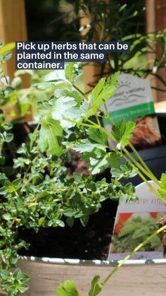 Herb Garden Design, Lawn And Garden, Garden Ideas, Small Gardens, Outdoor Gardens, Organic Gardening, Gardening Tips, Handicap Bathroom, Growing Lettuce