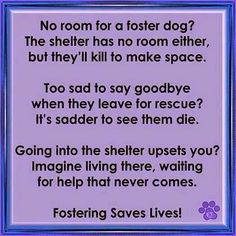 Texas Star Rescue in Longview, Texas as well as other rescues/shelters are always looking for foster homes. If you are interesting in fostering, please message us or call our main kennel at 9036602035 #TSRadopt #texasstarrescue #helpsavealife #rescuedismyfavoritebreed #woof #meow