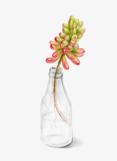 Succulents Drawing, Cactus Drawing, Floral Drawing, Plant Drawing, Cactus Art, Botanical Wall Art, Botanical Prints, Pencil Plant, Watercolor Flowers