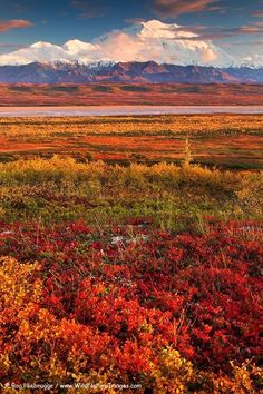 Denali National Park in Autumn