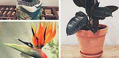Estas son las plantas que deberías tener en tu hogar para atraer buenas energías según el Feng Shui