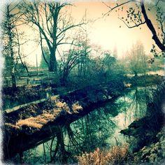 Golden Fall River Shine