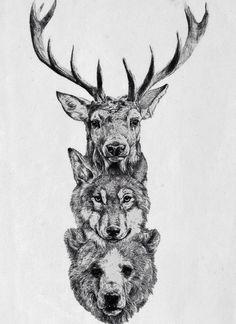 Deer wolf bear