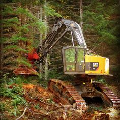 Cat feller buncher Logging Equipment, Heavy Equipment, Operating Engineers, Log Projects, Caterpillar Equipment, Lumberjacks, Harvester, Natural Resources, Dog Life