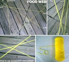 """Food Web: For this activity, one student starts with a ball of yarn, toss it to another student, and call out a component of the food chain in an ecosystem. Once everyone is holding onto the yard, the teacher will say that a certain tree got cut down and they will cut the string by that tree with scissors and see how """"creatures"""" were affected by one small change. This is good to see how human interactions and natural events affect the environment."""