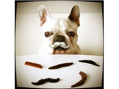 Celebrating Movember | Animals & Pets, Funny Pets