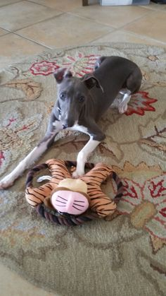 New toys from Auntie Luna