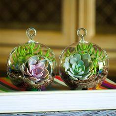 Mini Succulent Terrarium Duo Kit: Perle von Nurnberg/ Crassula Tetragona & Echeveria Domingo/ Crassula Tetragona