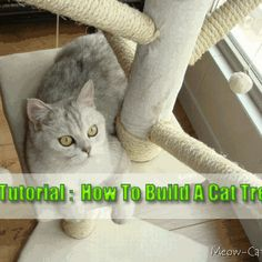 6 Free Plans For Cat Tree - Meow-Cat.com