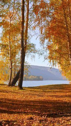 Nature autumn scenery, yellow leaves, trees, lake iPhone 5 (5S) (5C) (SE) wallpaper - 640x1136