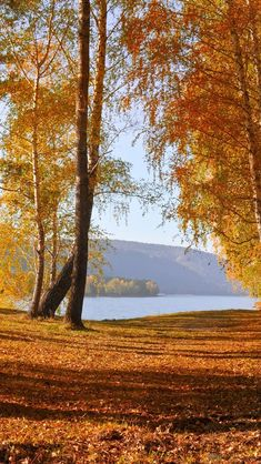 Nature autumn scenery, yellow leaves, trees, lake iPhone 5 (5S) (5C) (SE) wallpaper - 640x1136