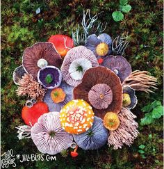 """14 mind-blowing facts about mushrooms People are so obsessed with plants and animals, we often forget a third category of organisms that can nourish us, heal us and heal our planet — fungi. An artist and self-proclaimed """"nature nerd"""" is doing her part to remind us of this magical kingdom …"""