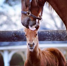 Awe! Mare licking foals sweet  little head.