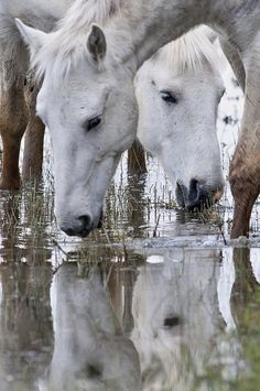 Drinking reflection