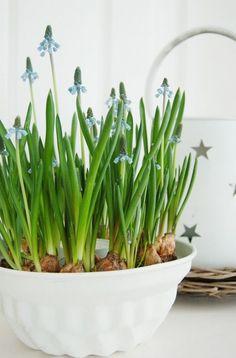 Tavaszi virágösszeállítások