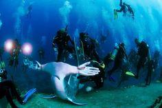 Huge Protest Dive Supporting Shark Conservation Planned For October 22nd https://www.deeperblue.com/huge-protest-dive-supporting-shark-conservation-planned-october-22nd?utm_content=bufferad0c6&utm_medium=social&utm_source=pinterest.com&utm_campaign=buffer (Ocean Advocacy)