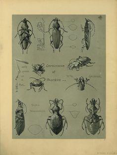 "compulsion2move: "" 〜beetle. """
