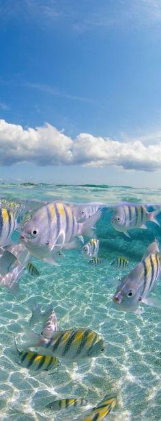 sea life - sea life photography - sea life underwater - sea life artwork - sea life watercolor sea l Aquarium Tropical, Fauna Marina, Life Under The Sea, Under The Ocean, Image Nature, Life Aquatic, Wale, Underwater Life, Sea And Ocean