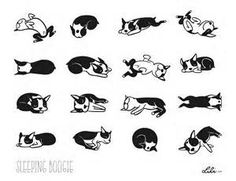 boston terriers clip art - yahoo Image Search Results