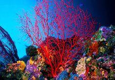 Sea Life ♥♥♥♥♥