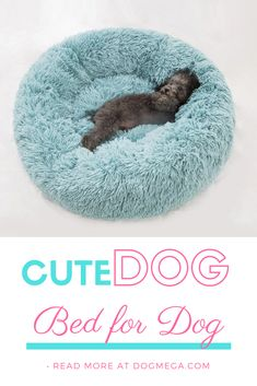 Shop our cute dog beds by size from toy to extra large. Molly Mutt has stylish dog beds that are machine washable and modern to complement your style. Cute Dog Beds, Cute Small Dogs, Puppy Beds, Dog Beds For Small Dogs, Cute Dogs, Dog Breeds Little, Big Dog Breeds, Unique Dog Breeds, Dog Breeds Chart
