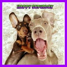 Bildergebnis für happy saturday sweety dog images