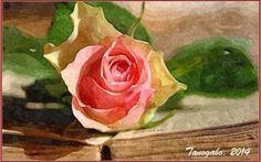 Elaborazioni grafiche - La leggenda della Rosa di Natale Quando abbassò gli occhi si accorse che le sue lacrime erano diventate delle bellissime rose di un colore rosa pallido. Felice, si alzò, le raccolse e partì subito verso la città. Regalò il mazzo di #elaborazionegrafica #leggenda #pastore