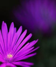 Wildflower by Pieter Oosthuysen, via