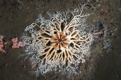 Inside the White Sea Biological Station is an unlikely photo studio where Alexander Semenov, 25, is sharing his stunning photographs of arctic sea creatures with the global online community. Description from pinterest.com. I searched for this on bing.com/images