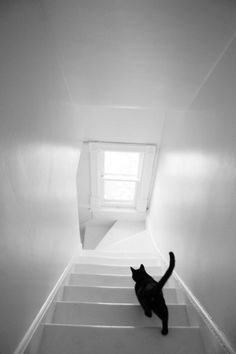 """""""If a black cat crosses your path, it's a sign that the animal is going somewhere."""" —Groucho Marx deviantart.com"""