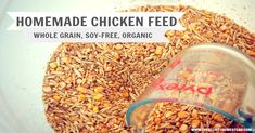 Organic, whole-grain, soy-free homemade chicken feed. Feed your ladies well! Cost breakdown included.