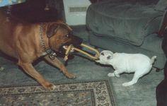 Duke and little Jess