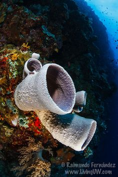 Sponge. ** Wow, this is fabulous. It looks like a big drainpipe.