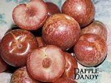 Dapple Dandy Pluot / Citation [SPRING]