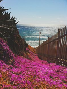 follow the pink and orange road - my favorites...flowers and the ocean...i'm home!!!!