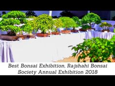 Best Bonsai Exhibition, Rajshahi Bonsai Society Annual Exhibition 2018 - YouTube How To Grow Bonsai, Pruning Tools, Deciduous Trees, Bonsai Garden, Early Spring, Picture Video, Cool Pictures, Channel, News