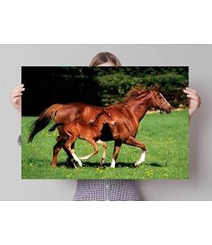 Poster Merrie en veulen Horses, Poster, Animals, Animales, Animaux, Animais, Horse, Posters, Words