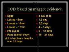 Time of death based on maggot evidence. *this is why research at facilities like the Body Farm in Tennessee are so important.