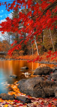 Lake Scene iPho… | iPhone5 Wallpaper Gallery