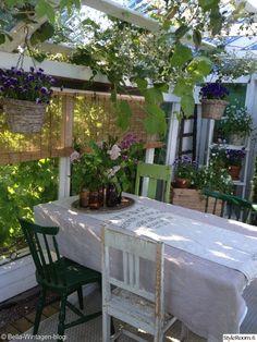 kesähuone,kasvihuone,huvimaja,piha,puutarha,kasvi,kukka,istutus,parveke