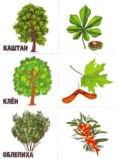 Autumn Activities For Kids, Preschool Learning Activities, Crafts For Kids, Nature Crafts, Autumn Theme, Kids Cards, School Projects, Trees To Plant, Montessori