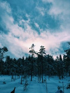 Speismark, vinterferien 2016 | tasserud | VSCO
