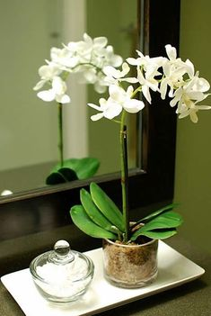Home Tour: Downstairs Bathroom Orchid Flower Arrangements, Orchid Centerpieces, Orchid Pot, Orchid Plants, Vasos Vintage, Rose Garden Design, Flower Pots, Flowers, Orchid Care