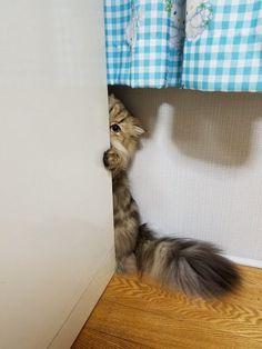 物陰からこっそり見ているのがバレバレのネコちゃん - Yahoo!ニュース(ねとらぼ)