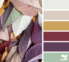 fallen tones by design seeds.  I believe that adding purple is a MUST for fall tones, yet it is often over looked.